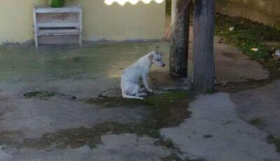 Em resposta a rinhas de cães, deputados aprovam mais tempo de cadeia para maus-tratos