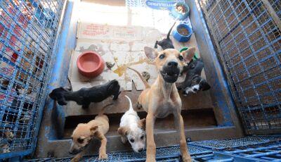 Prefeitura vai criar subsecretaria para gerenciar UPA para cães e gatos