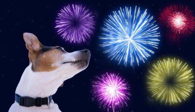 Show da virada terá menos fogos e mais luzes no céu por causa dos animais em Bonito (MS)