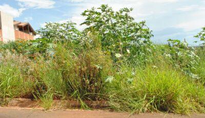 Promotor orienta para que terrenos recebam multa após 1ª notificação em Bonito (MS)