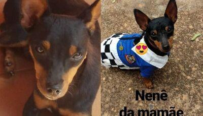 Cãozinho morre de tristeza após sua dona viajar para socorrer pai em acidente