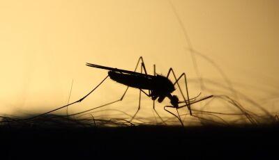Mulher de 52 anos é a sexta vítima de Dengue em 2020, aponta boletim da Saúde de MS