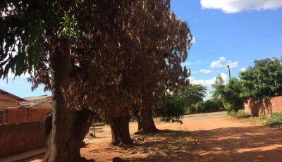 PMA autua homem de 43 anos por envenenar árvores em via pública em Jardim (MS)