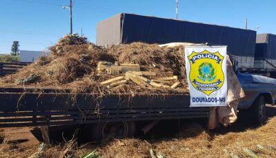 Abacaxi atômico: polícia encontra maconha misturada a frutas