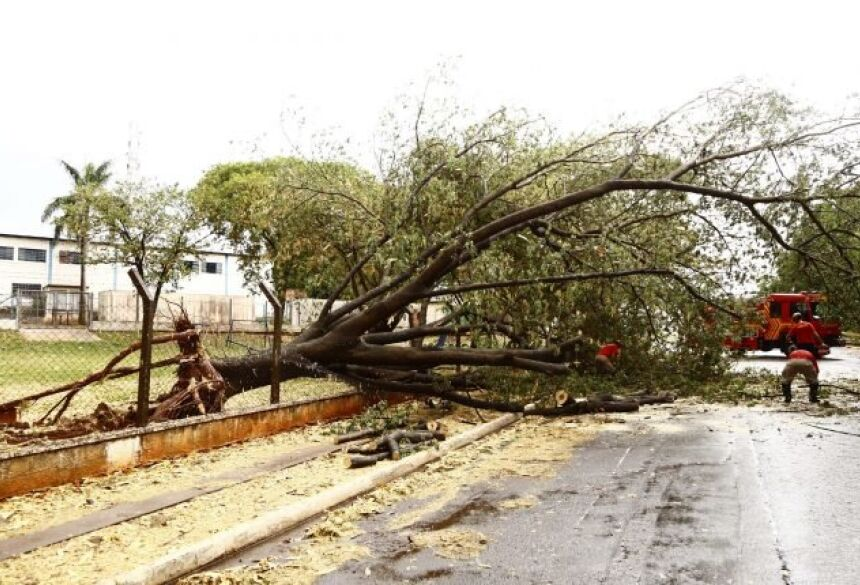 Registros de árvores caídas no Santa Emília e Vila Bandeirantes (Foto: Leonardo de França)