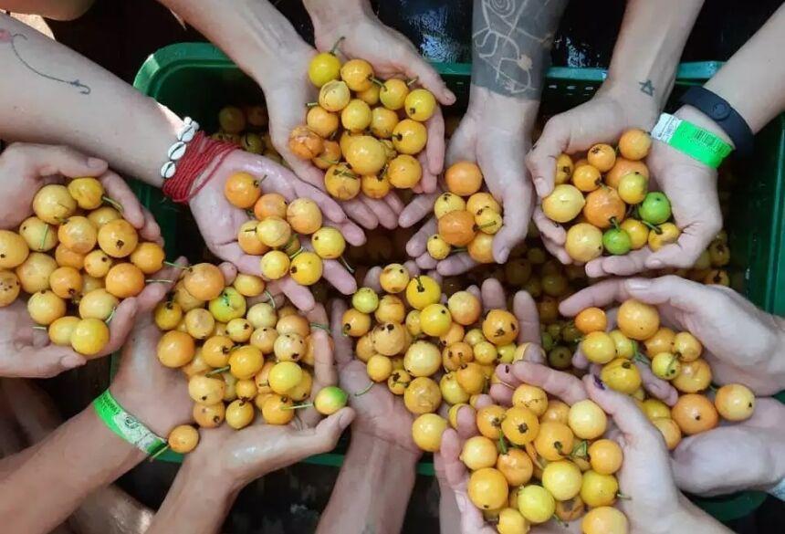Grupo de participantes catam a guavira do pé da árvore em edição anterior do evento (Foto: Reprodução/Instagram)