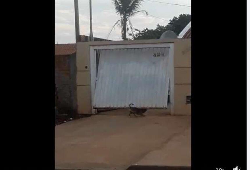 Cachorro abre portão no São Conrado em Campo Grande - Crédito: Reprodução Facebook/ Francisco Assis Dias