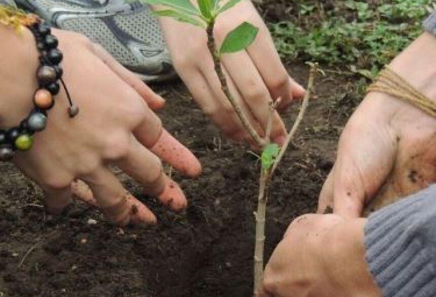 Ações do IASB de recuperação ambiental
