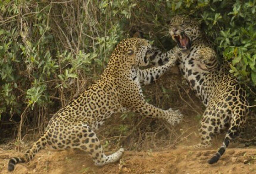 Foto: Divulgação/ Joe McDonald/ Wildlife Photographer of the Year