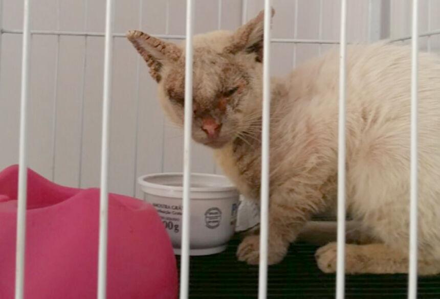 Turista acha gato, paga todo tratamento e agora quer um lar para ele, alguém se interessa