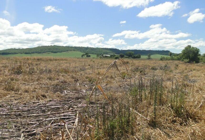FOTO: PMA - PMA autua fazendeiro em R$ 16,5 por desmatamento ilegal de 16 hectares em Guia Lopes