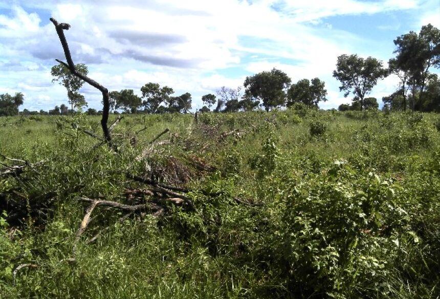 FOTO: PMA - PMA autua fazendeiro em R$ 10,5 mil por desmatamento ilegal de 35 hectares de mata nativa em Bonito