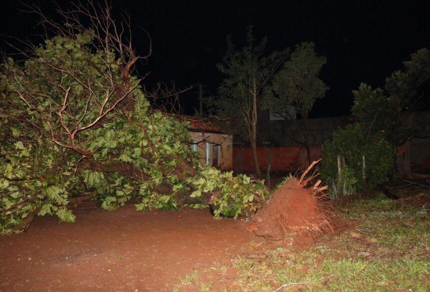 Houve a queda de dezenas de árvores em meio ao temporal que atingiu cidade de MS — Foto: Edinho Côrrea/Arquivo Pessoal