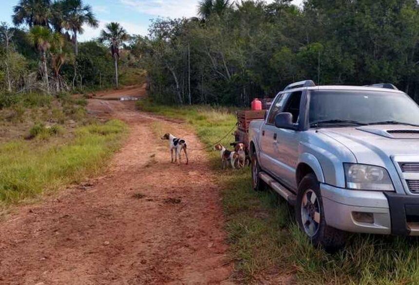 Cães foram apreendidos pela PMA — Foto: PMA/Divulgação