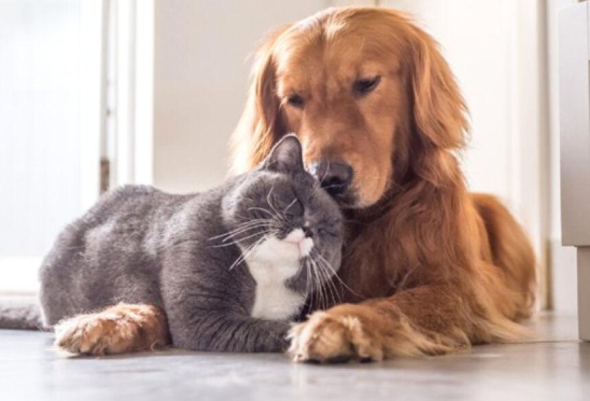 Governador sanciona lei que permite animais domésticos em hospitais públicos e privados