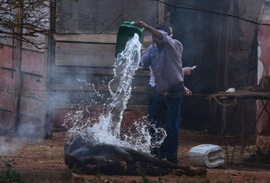 Homem tenta socorrer cavalo das dores das picadas de abelhas recebidas - Álvaro Rezende/Correio do Estado