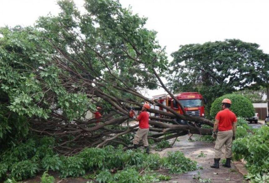 Árvore caiu na Avenida Madrid e bloqueou a pista. (Foto: Henrique Kawaminami)
