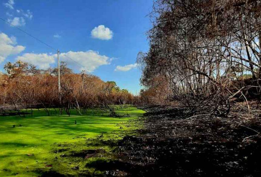 De um lado beleza, de outro a destruição deixa pós queimadas no Pantanal de Corumbá Foto: Fotos: Álefe Cáceres