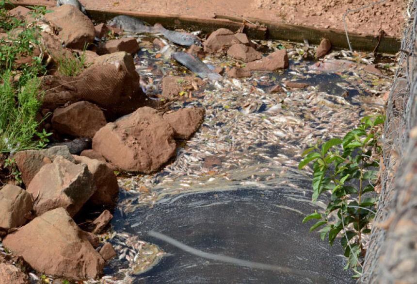 Grande quantidade de peixes mortos se acumulam ao longo do rio Anhanduí - Foto: Bruno Henrique/Correio do Estado
