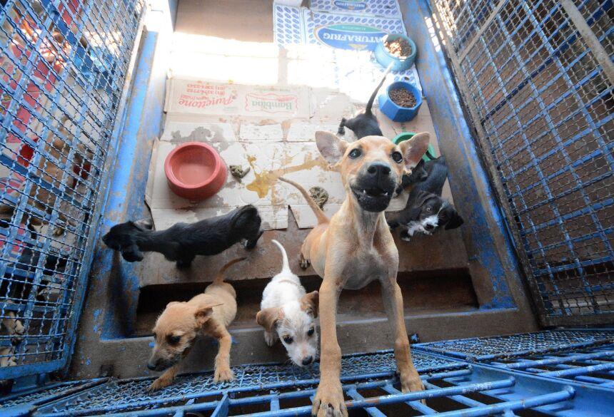 Nova estrutura deve garantir direitos dos animais - Foto: Álvaro Rezende/Arquivo/Correio do Estado