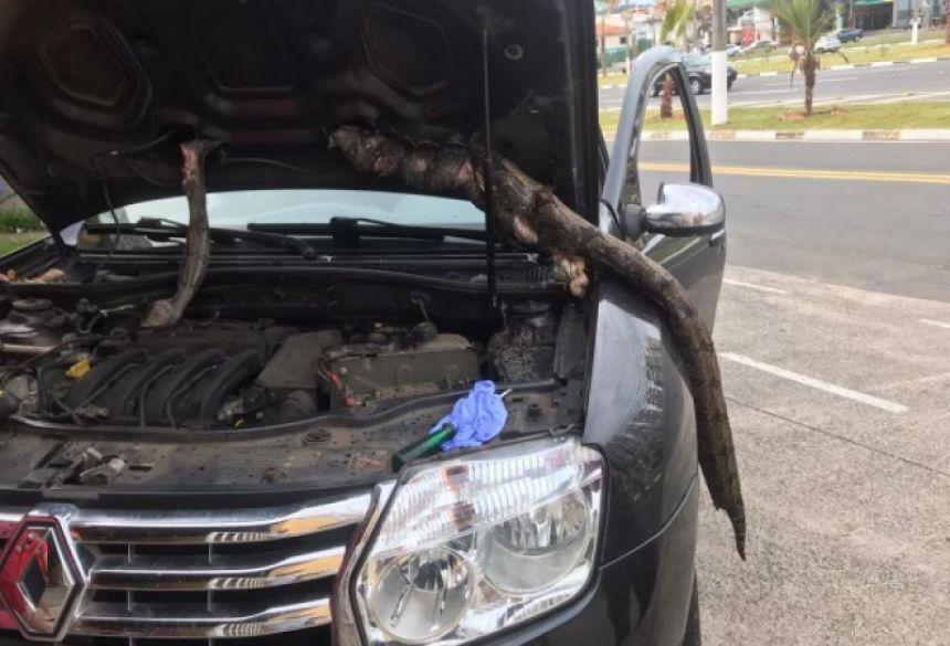 Família viaja do Paraná a São Paulo com jibóia no capô e não percebe. Veja vídeo (Foto: Reprodução )