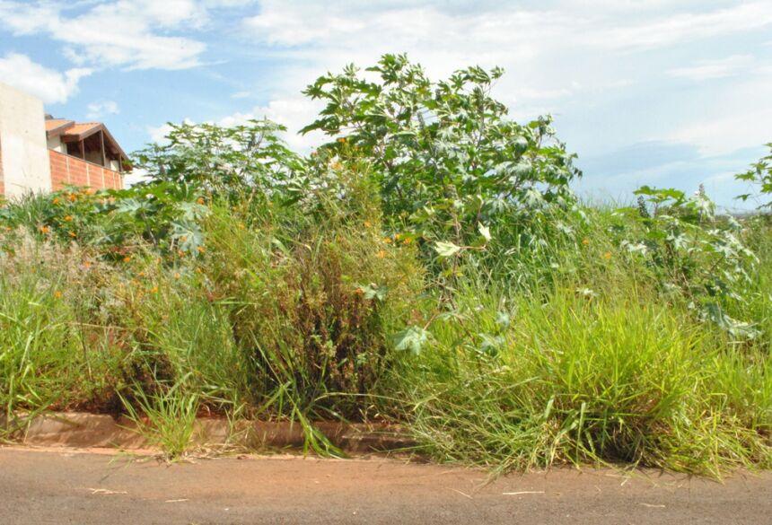 Multa por não limpar o terreno é de R$ 5.864,00 (cinco mil oitocentos e sessenta e quatro reais). Foto: Divulgação