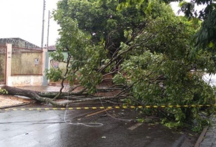 Árvore caiu na manhã deste sábado na Rua Thomas Edson. (Foto: Guilherme Correia)