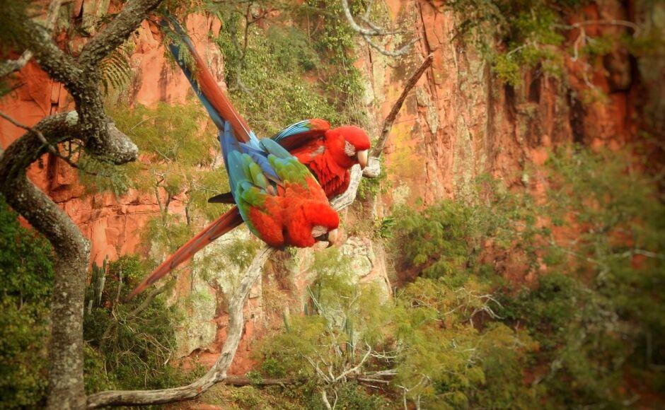 ESPECIAL IDB: passeio ao redor da maior dolina da América do Sul é no Buraco das Araras